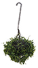 CAHBL06 - Hanging Basket: Variegated Green, Large