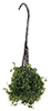 CAHBS06 - Hanging Basket: Varigated Green, Small