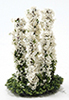 CALSP12 - Larkspur Flower, White, 5Pc