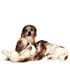 AZB0009 - Dogs, Set, 3