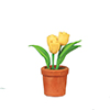 AZB0133 - 3-Pc Tulip In Pot, Yellow