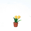 AZB0135 - Tulip in Pot, Yellow
