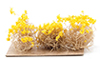 CA0310 - Yellow Brittle Bushes, 3pc