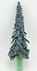 Eastern Blue Spruce, 8 Inches