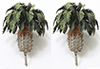 "2"" Tall Sago Palm (2)"