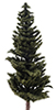 Conifer Tree, 8 Inches