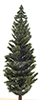 Conifer Tree, 10 Inches