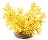 CAFSSM - Forsythia Bush, Small