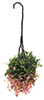 CAHBS20 - Hanging Basket: Fuchsia, Small