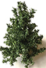 CLD6011 - Evergreen Tree Kit