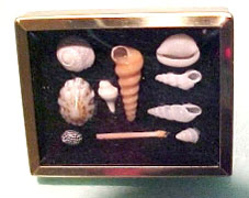 HR61010 - Framed Shadow Box With Shell Collection, Assorted