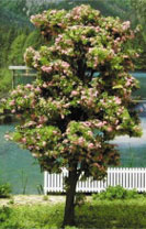 MBTRE8BL - Tree-Premade 8 Inch Blossom 2Pc